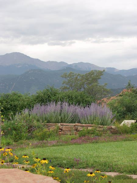 Xeric garden with mountain backdrop